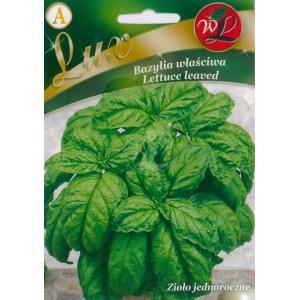 Bazylia Lettuce leaved2267-3758-large