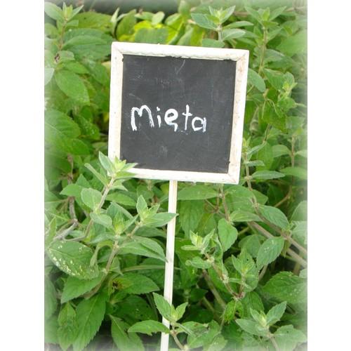 Pozostałe akcesoria i dodatki do roślin Dakls Tabliczka do opisywania ziół